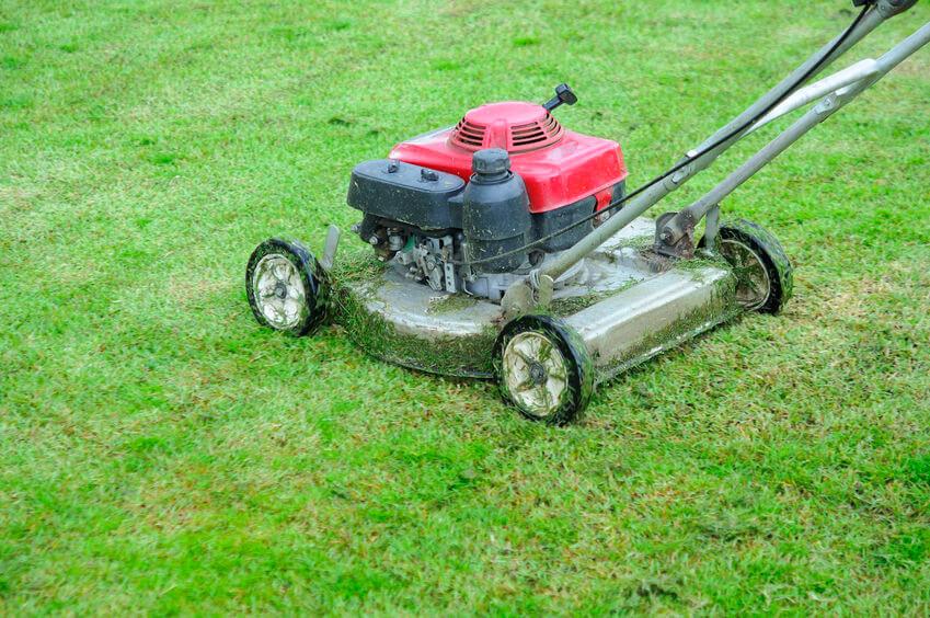 walk-behind push gas lawn mower in garden