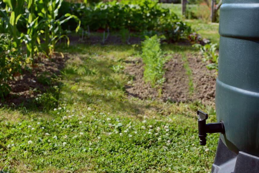 water barrel in garden