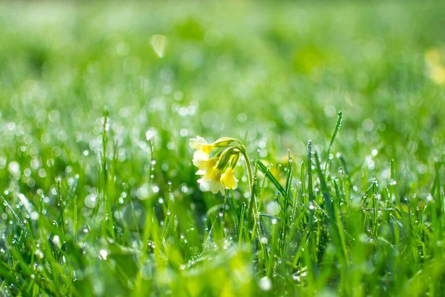 wet green grass at daytime