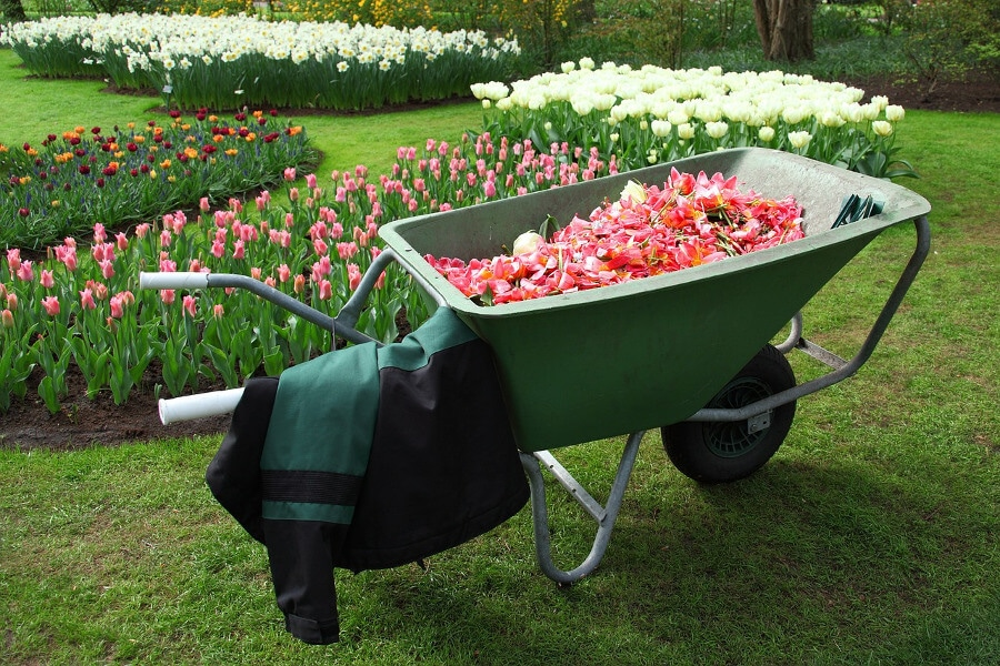 wheelbarrow cart and flowers