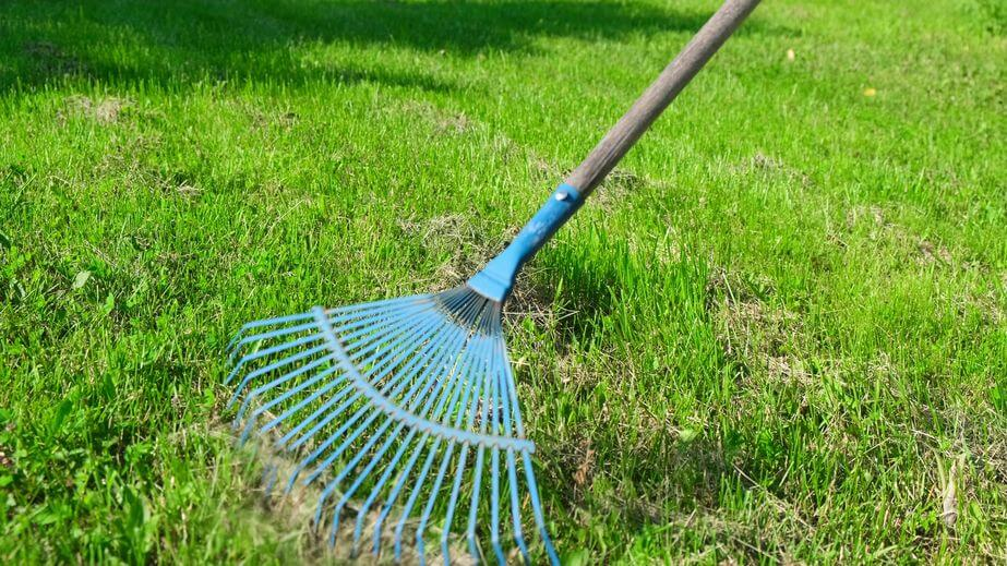 working with green rake on lawn